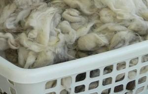 washing sheep wool, how to clean fleece