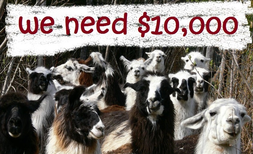 Every Purchase Helps a Llama